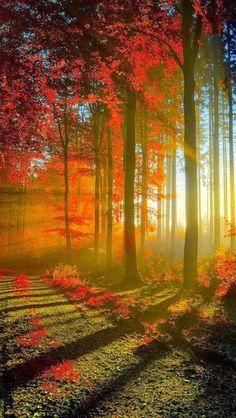 Autumn trees and sunshine