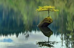 small tree growing on a log in the middle of the lake.