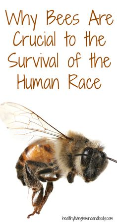 Why Bees Are Crucial to the Survival of the Human Race | Healthy Living in Body and Mind