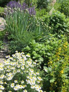 Autor: Anči Herb Garden, Herbs, Plants, Author, Herbs Garden, Herb, Plant, Planets, Medicinal Plants