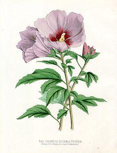 Joseph Paxton's Flower Garden 1884