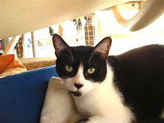 Helfende Hände e.V. - Katze Elli (EKH 5 Jahre) sucht ein Zuhause   Steckbrief…