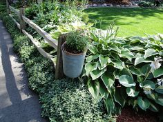 I like the landscaping idea around the fence but the hostas will have to GO.