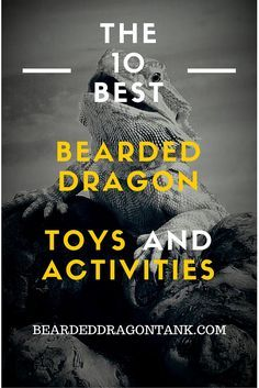 Bearded dragons can get bored too! As you might know, reptiles are pretty intelligent and that means that they can get bored if they haven´t anything to do. This article shows you 10 great toys and activities for your bearded dragon! Bearded Dragon Habitat, Bearded Dragon Cage, Bearded Dragon Funny, Bearded Dragon Food List, Reptiles, Pet Lizards, Amphibians, Pet Dragon, Baby Dragon