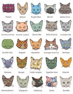 Interesting chart of different cat breeds. [{very cute}].