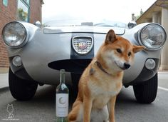 2015 Luna Nuda Pinot GrigioLovin the car kinda... #shiba