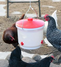 Translucent bucket lets you see inside Three side-mounted, non-freeze nipples Top removes easily for re-filling Heated Chicken Waterer, Automatic Chicken Waterer, Compost, Poultry, Freeze, Bucket, Top, Backyard Chickens, Buckets