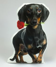 Another great find on #zulily! Black Dachshund With Rose Throw Pillow #zulilyfinds