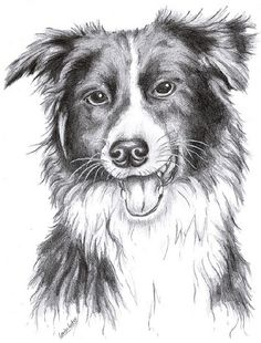 Realistic Pencil Drawings, Graphite Drawings, Animal Drawings, Art Drawings, Dog Sketches, Drawing Sketches, Sketching, Sketch Ideas, Sketch Art