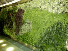 NBC Experience Store Greenwall - The interior greenwall utilizes the patented 24″x24″x4″ Green Living Wall Panels consisting of low light indoor plants. The grow lights use only 7W of electricity and the bulbs last over 50,000 hours, making the lighting unit a great low cost option.