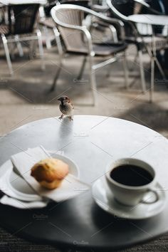 Coffee with muffin and a sparrow by BORISHOTS on @creativemarket