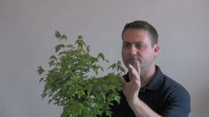 How to Bonsai - Reduce Leaf Size