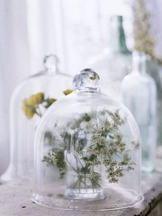 Bringing the Outside In     Clear glass cloches over tender garden cuttings make a mesmerizing display on the antique bench. These charming touches bridge the gap between outside and inside.