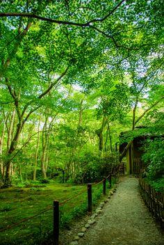 Spring in Giouji Temple, Kyoto, Japan