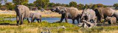 Limpopo 20 Tage Wunderwelten-Reise. Elefantenfamilie am Wasserloch (© Chamäleon)