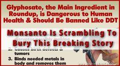 Monsanto is scrambling to bury this breaking story