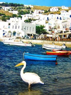 ~Mykonos~ Greece
