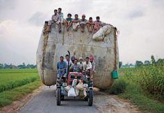 Indische Ernten-Transport in Bildkategorie TRANSPORT