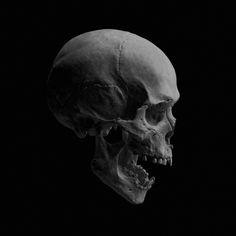 Skull Skull Reference, Art Reference Poses, Skull Artwork, Tinta China, Pinstriping, Nose Art, Skull And Bones, Daredevil, Conception