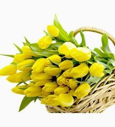 Tulips, Plants, Plant, Tulip, Planets