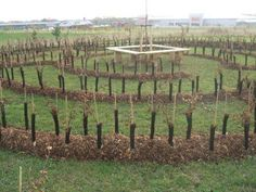 The creation of a maze took place at Brook Country Park during Autumn 2010.    Children from Great Clacton Junior School and volunteers helped to plant and mulch a total of approximately 900 hornbeam trees. The planted hornbeam trees, protected by rabbit guards and wood chippings.