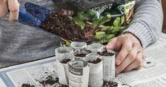 Im Februar und März ist Aussaatzeit für Gemüsepflanzen und Sommerblumen. Mit wenigen Handgriffen können Sie dafür Anzuchttöpfe aus