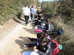Quadern de Camp. Observacio Llentiscle (pistacia lentiscus)  Escola Pont de l'Arcada