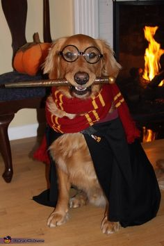 Here are the best Halloween Costumes for Dogs ideas to dress up your pup for Halloween. These Dog Halloween costumes are cute, funny & best for halloween. Cute Dog Halloween Costumes, Large Dog Costumes, Best Dog Costumes, Pet Costumes, Creative Costumes, Golden Retriever Halloween Costumes, Animal Costumes, Harry Potter Dog Costume, Perros Golden Retriever