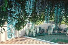 Fênix Plantas e Jardins: Trepadeira Jade: Dê este presente ao seu Pergolado!