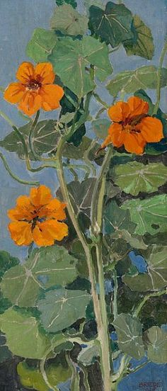 Johannes Briedé Indian Cress 1928 My mom used to call these nasty urchins (Nasturtium) flowers, leaves and seeds are edible.