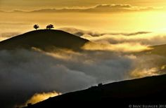 Two trees View from Grant Park Ventura with fog rollin in. Ventura California, Ventura County, California Homes, Ventura Homes, Horror Photography, Two Trees, Grant Park, Beach Town, Great Shots