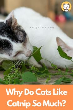 """The """"meow meow"""" sound is very familiar in many families. Cats aren't only . - Cat Tips And Tricks - Baby Cats, Cats And Kittens, Kitty Cats, First Time Cat Owner, Cat Brain, Cats And Cucumbers, Cheap Pets, Cat Behavior, All About Cats"""