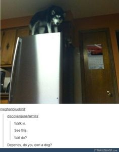 funny tumblr comments 1-7 1