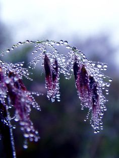 Frozen Violet~