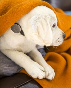 1-whistle-the-wearable-activity-tracker-for-dogs