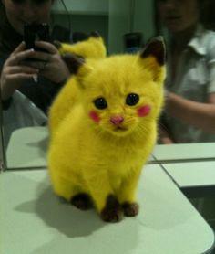 Pi-CAT-chu