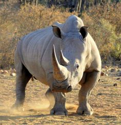 With 25 different wildlife species on the 6000 hectares at GocheGanas, our game drives remain a very popular activity. With the abundance of game on the farm, every game drive has its highlights, especially when guests are lucky enough to view our rhino family!#africa #namibia #windhoek #safari #serengeti #spa #nature #wellness #fitness #wildlife #wilderness #rhino #destination
