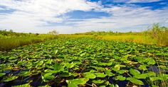 T.Y. Lin International Group   Projects   ACCELER8 Program – Everglades Restoration