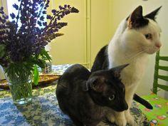 Kesä on kissoja ja kukkasia.