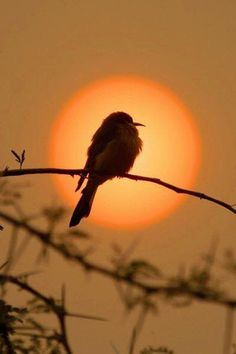 """Liittle bee-eater in smoky sunset"" by Pieter Ras on 500px"