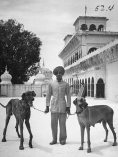 james-burke-marahajas-great-dane-dogs-which-tower-high-in-comparison-to-an-assistant