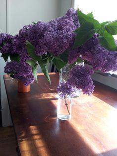 Lilac hunter.