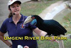 Umgeni River Bird Park River, Bird, Birds, Rivers