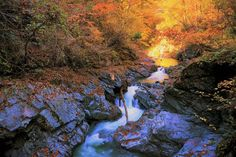 Valley stream in a late fall 4 by Chikara Amano