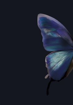 Atmospheric Butterfly Background Poster