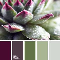 Color Palette #2783