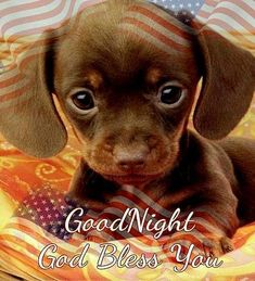 animals preescolar I love it I love it so much I love too much Im gonna dye of a rare case of smileocice Good Night Qoutes, Good Night Funny, Good Night Friends, Good Night Messages, Good Night Wishes, Good Night Sweet Dreams, Good Night Image, Good Morning Good Night, Night Quotes