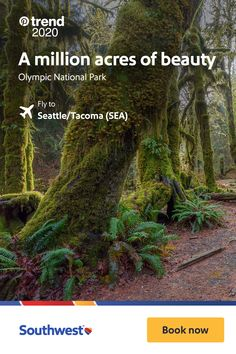 Beautiful Places To Visit, Cool Places To Visit, Oh The Places You'll Go, Rainforests, Best Places To Travel, Nature Pictures, Vacation Spots, Beautiful Landscapes, Trip Planning