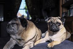 Real Pets: Show and Tell – Freddie, Brian, DeeDee, Rufus and Banksy