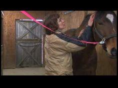 Equine Massage Techniques : Equine Massage Neck Effleurage